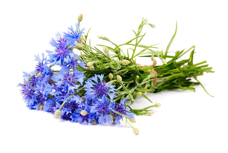 bouquet de bleuet